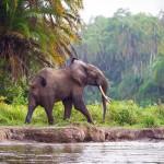 африка Индивидуальный туризм